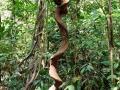 Tree jungle (1)